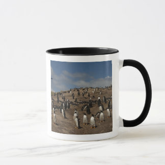 Gentoo Penguin (Pygoscelis papua) colony on West Mug