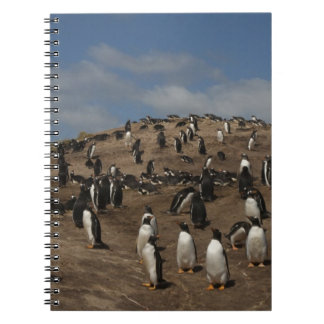 Gentoo Penguin (Pygoscelis papua) colony on West Notebook