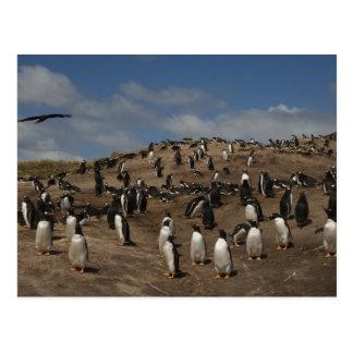 Gentoo Penguin (Pygoscelis papua) colony on West Postcard