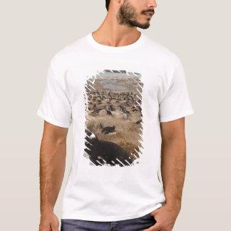 Gentoo Penguin (Pygoscelis papua) colony, West 2 T-Shirt