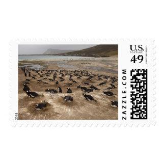 Gentoo Penguin (Pygoscelis papua) colony, West Postage