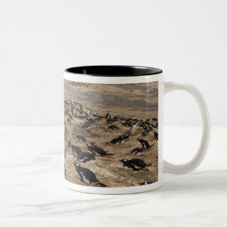 Gentoo Penguin (Pygoscelis papua) colony, West Two-Tone Coffee Mug