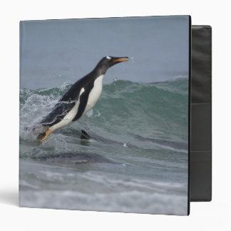 Gentoo Penguin Pygoscelis papua) coming in on Binders