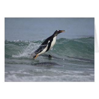 Gentoo Penguin Pygoscelis papua) coming in on Card