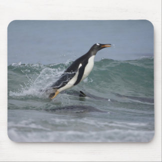 Gentoo Penguin Pygoscelis papua) coming in on Mouse Pad