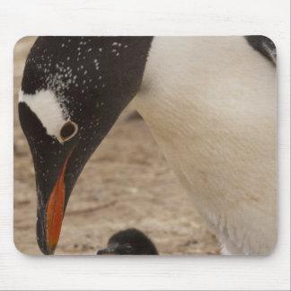 Gentoo Penguin (Pygoscelis papua) feeding a Mouse Pad