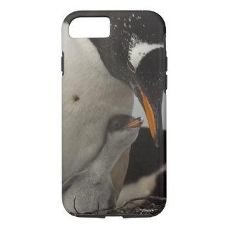 Gentoo Penguin (Pygoscelis papua) feeding chick, iPhone 8/7 Case
