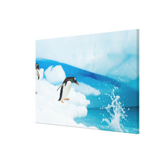 gentoo penguin, Pygoscelis Papua, jumping off an Canvas Print