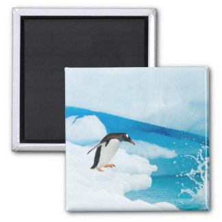 gentoo penguin, Pygoscelis Papua, jumping off an Magnet