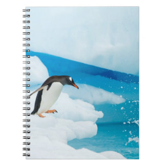 gentoo penguin, Pygoscelis Papua, jumping off an Notebook