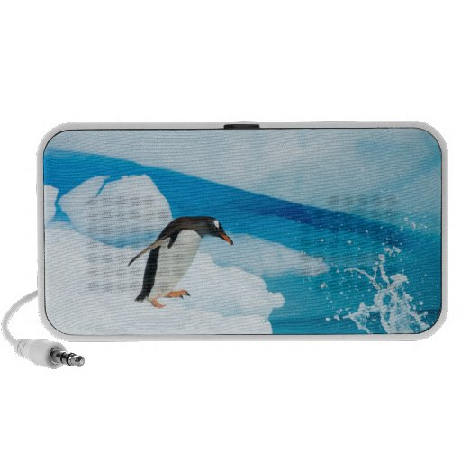 gentoo penguin, Pygoscelis Papua, jumping off an iPhone Speaker
