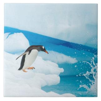 gentoo penguin, Pygoscelis Papua, jumping off an Tile