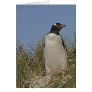 Gentoo Penguin (Pygoscelis papua), Keppel Card