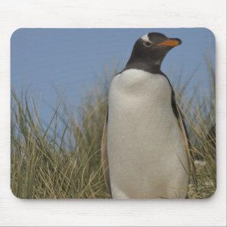 Gentoo Penguin (Pygoscelis papua), Keppel Mouse Pad