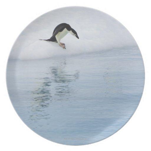Gentoo penguin (Pygoscelis papua) Melamine Plate