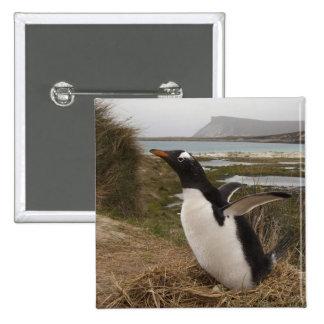 Gentoo Penguin (Pygoscelis papua) on a nest, 2 Inch Square Button