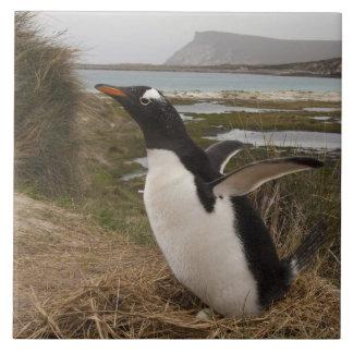 Gentoo Penguin (Pygoscelis papua) on a nest, Tile