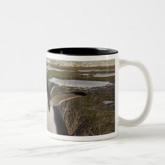 Gentoo Penguin (Pygoscelis papua) on a nest, Two-Tone Coffee Mug