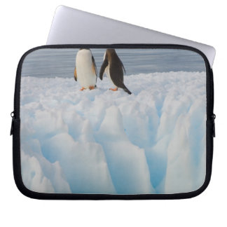 gentoo penguin, Pygoscelis Papua, on glacial ice Laptop Computer Sleeves