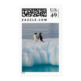 gentoo penguin Pygoscelis Papua on glacial ice Stamp