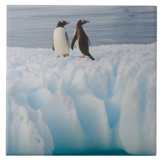 gentoo penguin, Pygoscelis Papua, on glacial ice Tile