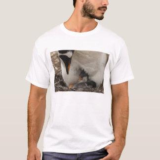 Gentoo Penguin (Pygoscelis papua) on nest with T-Shirt