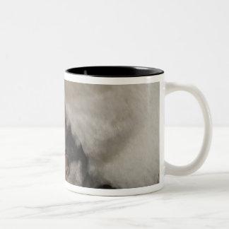 Gentoo Penguin (Pygoscelis papua) on nest with Two-Tone Coffee Mug