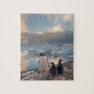 gentoo penguin, Pygoscelis Papua, parent with 2 Jigsaw Puzzles