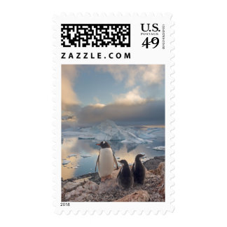 gentoo penguin Pygoscelis Papua parent with 2 Postage Stamp