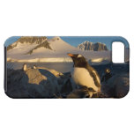 gentoo penguin, Pygoscelis Papua, parent with iPhone 5 Cover