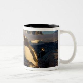 gentoo penguin, Pygoscelis Papua, parent with Two-Tone Coffee Mug