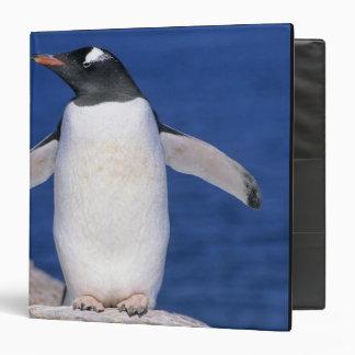 Gentoo Penguin Pygoscelis papua) Port Binder