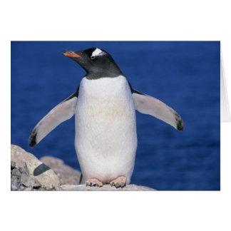 Gentoo Penguin Pygoscelis papua) Port Card