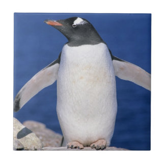 Gentoo Penguin Pygoscelis papua) Port Ceramic Tile