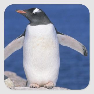 Gentoo Penguin Pygoscelis papua) Port Square Sticker
