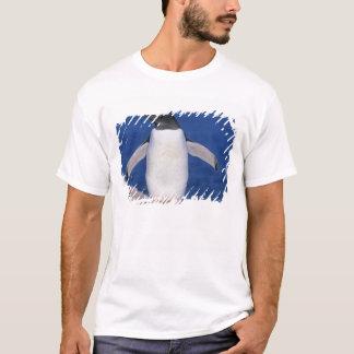 Gentoo Penguin Pygoscelis papua) Port T-Shirt