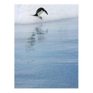 Gentoo penguin (Pygoscelis papua) Postcard