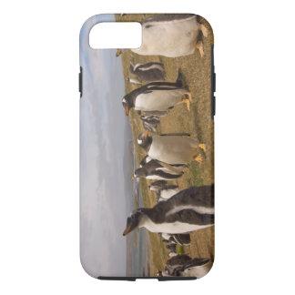 gentoo penguin, Pygoscelis papua, rookery on iPhone 8/7 Case