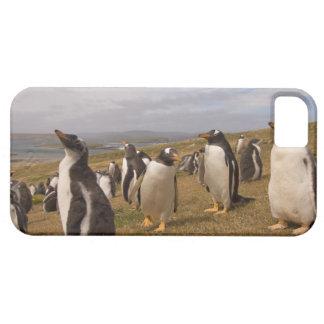 gentoo penguin, Pygoscelis papua, rookery on iPhone SE/5/5s Case
