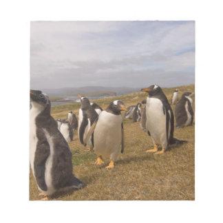 gentoo penguin, Pygoscelis papua, rookery on Notepad