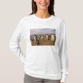 gentoo penguin, Pygoscelis papua, rookery on T-Shirt