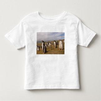 gentoo penguin, Pygoscelis papua, rookery on Toddler T-shirt