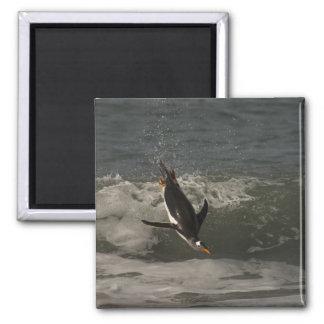 Gentoo Penguin (Pygoscelis papua) Sea Lion Magnet
