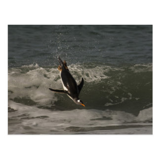 Gentoo Penguin (Pygoscelis papua) Sea Lion Postcard