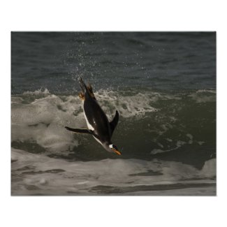 Gentoo Penguin (Pygoscelis papua) Sea Lion Poster