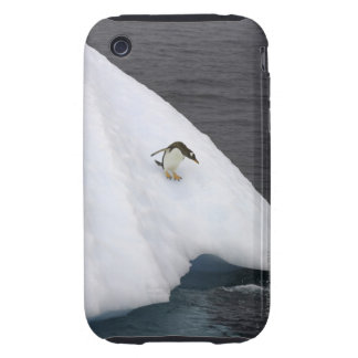 Gentoo penguin Pygoscelis papua) standing iPhone 3 Tough Cover