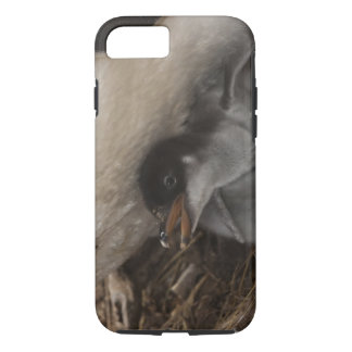 Gentoo Penguin (Pygoscelis papua) with chick, 2 iPhone 7 Case