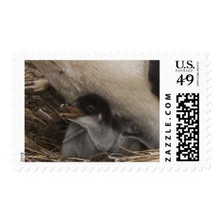 Gentoo Penguin (Pygoscelis papua) with chick, 2 Postage Stamp