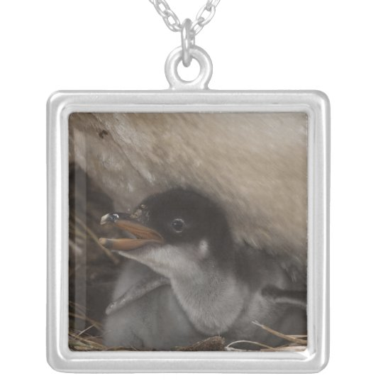 Gentoo Penguin (Pygoscelis papua) with chick, 2 Silver Plated Necklace