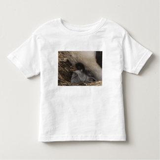 Gentoo Penguin (Pygoscelis papua) with chick, 2 Toddler T-shirt